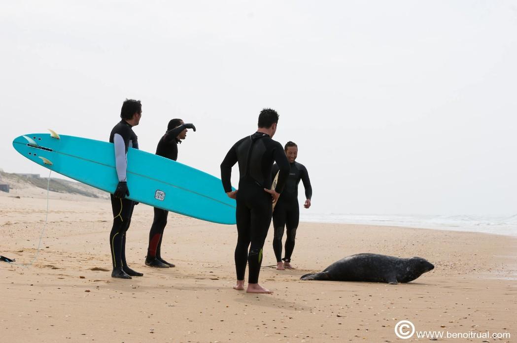 Off et les surfers vers l'eau