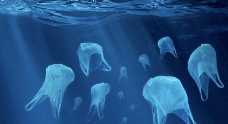 meduses sacs plastique