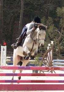 saut equestre