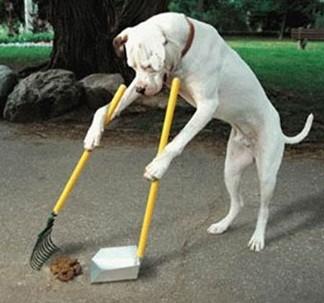 chien raùasse sa crotte