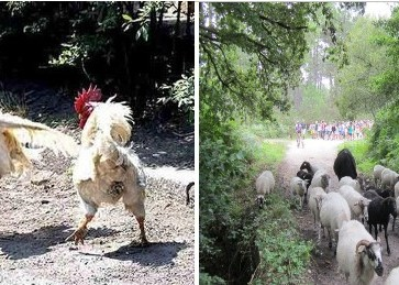 foot transhumance