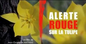 alerte rouge sur la tulipe 2