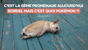 chien pokemon