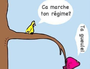 regime-oiseaux