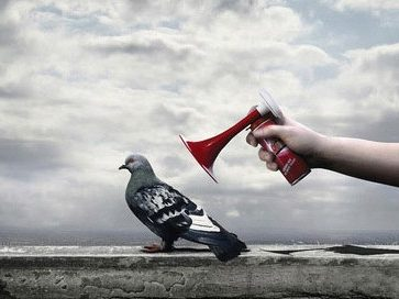 pigeon bruit