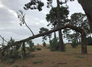 arbre casse Benoit Rual