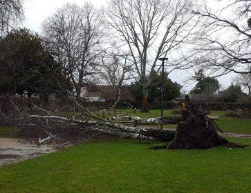tempete arbre louis david