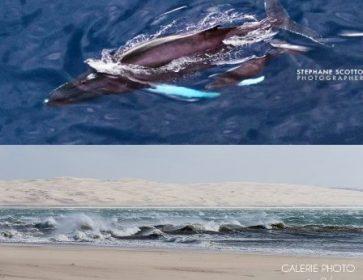 baleine pointe