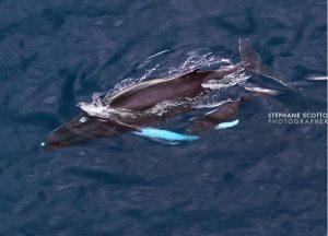 baleine scotto