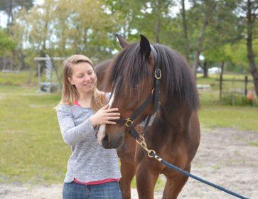 caro cheval