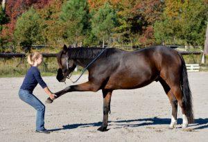caro cheval soins