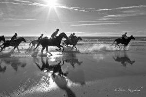 ringenbach chevaux