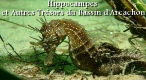 Affiche 2 flm hippocampes Nadau