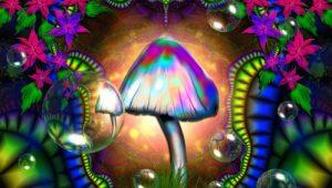 lyselotte champignons hallucinogenes