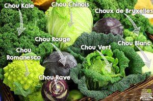 lyselotte choux