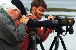 comptage oiseaux ares