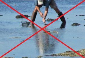 interdiction ramassage moules