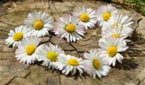 ludivine regime fleurs equilibre