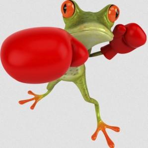 grenouille boxe