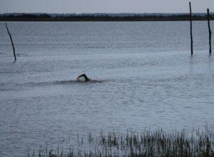 JP Larrue nage depart