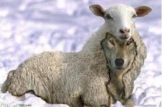 loup sous agneau