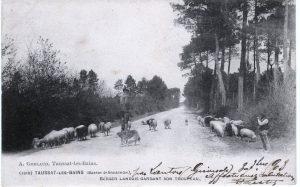 Corinne Lacoste berges sur la route taussat