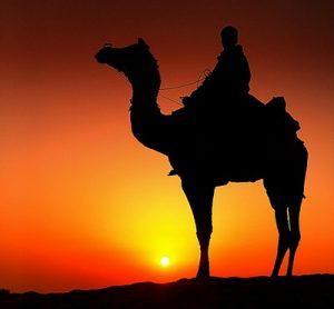 chameau soleil couchant