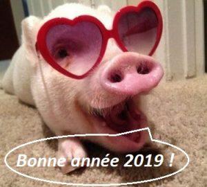 cochon lunettes bulle bonne année