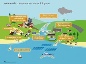 pollution microbiologique eaux du bassin ifremer