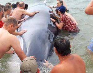 baleine la lagune