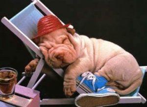 sommeil idp chien filipe
