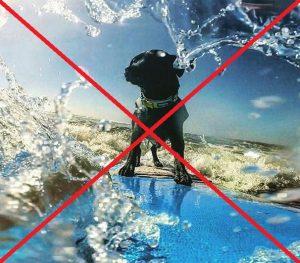surf chien non