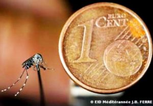 moustique tigre pice 1ct euro