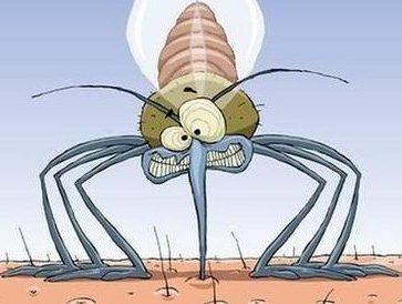 moustique de face