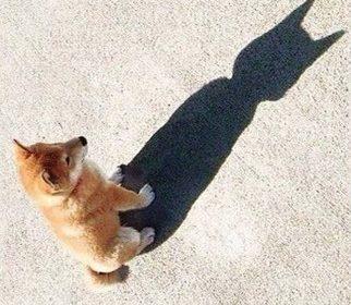 ludivine batman