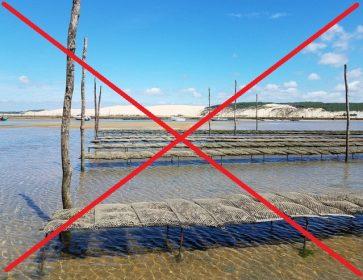 interdiction huitres arguin 2019