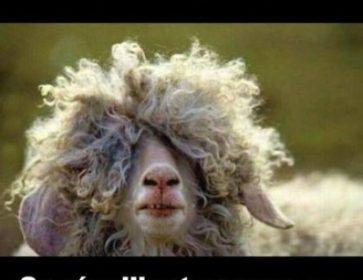 ludivine cheveux frises