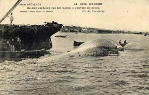 HDB confoulan Baleine entree bassin