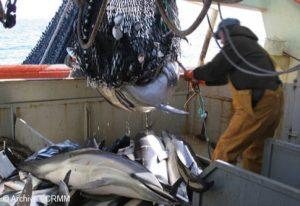 dauphin peche ds bateau crmm