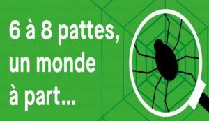 6 a 8 pattes araignees audenge