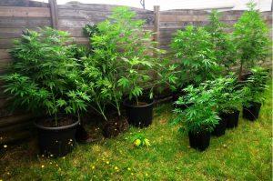 gendarmerie 28 08 21 cannabis