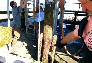 travaux piliers boix rongé cabane nade